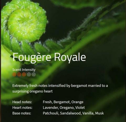 Fougere Royale Duftmarketing Aromaöl 200 ml
