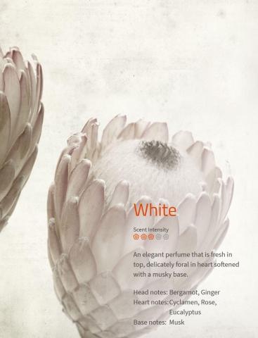 White Ein elegantes Parfüm, welches frisch in der Spitze und blumig im Herzen ist.