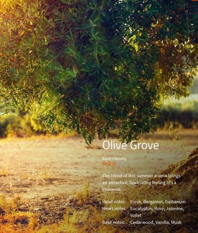 Olive Grove Aromaöl 200ml Der Duft des Sommers in der Provence.