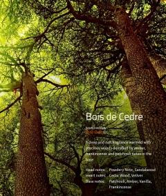 Bois de Cedre Ein starker, warmer Duft mit holziger Note, verdichtet durch Spuren des Bernsteins, Weihrauchs und Patschulis.